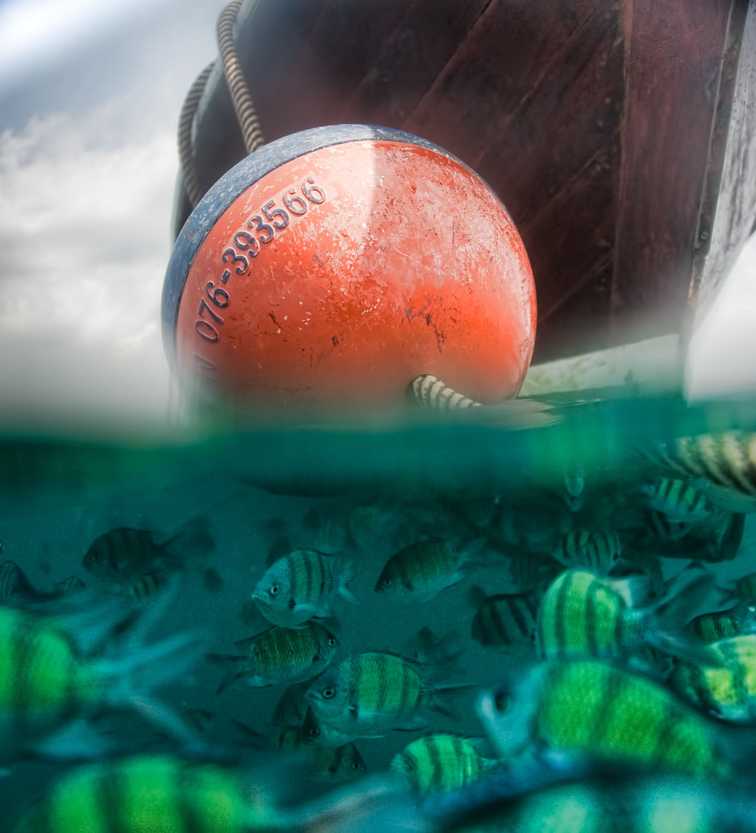 Photograph Fish Under a Boat by Sam Gellman on 500px