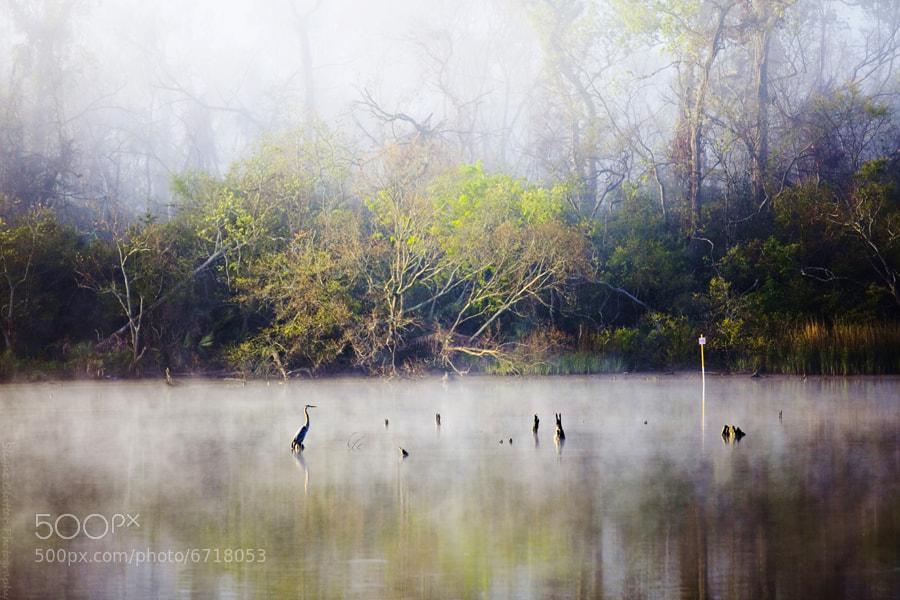 Photograph heron by Katya Horner on 500px