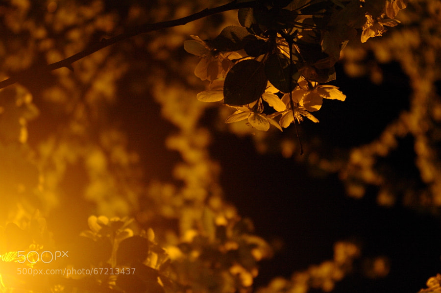 Photograph Night by wisteria2 kozo on 500px