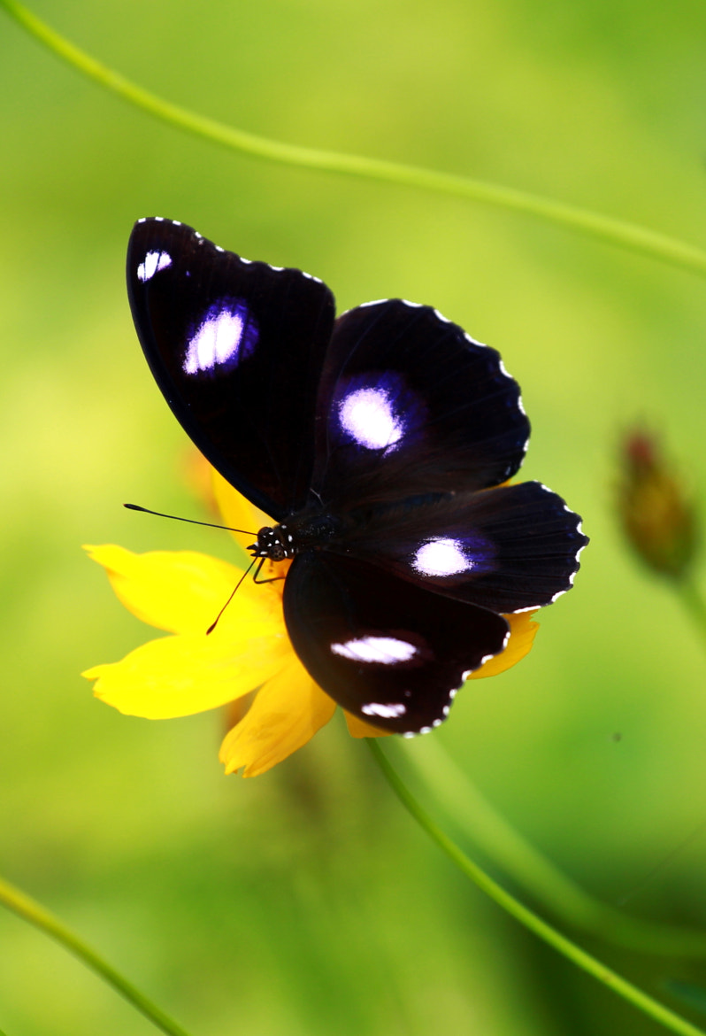 Photograph Flower & Butterfly ... by Susanto Mega on 500px