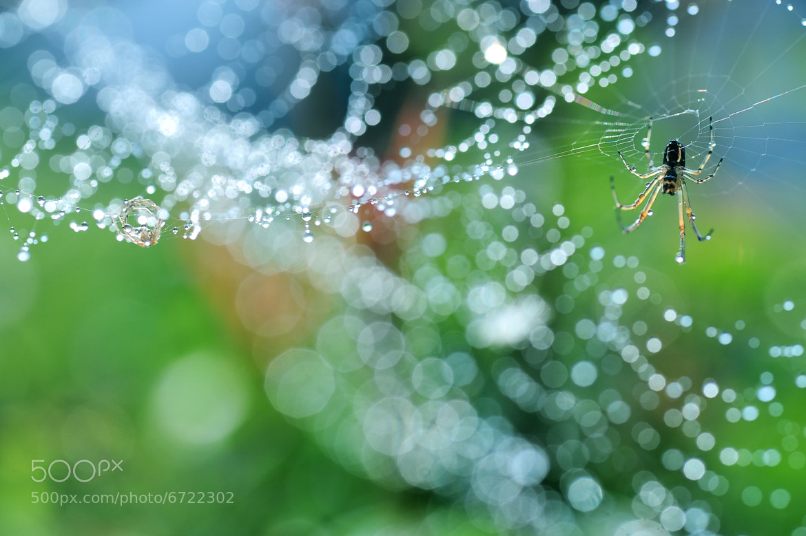 Photograph Molting of the creator by Lafugue Logos on 500px