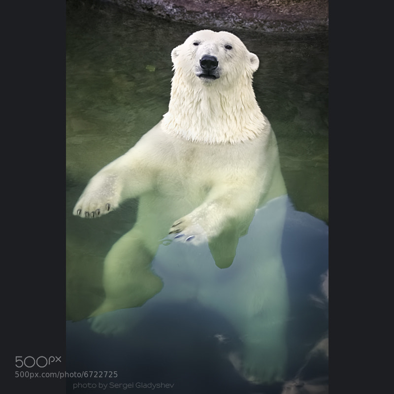 Photograph spa for a polar bear by sergei gladyshev on 500px
