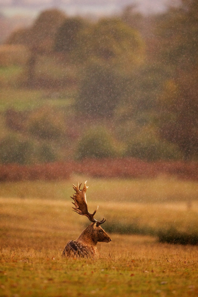 Photograph waiting in the rain by Mark Bridger on 500px
