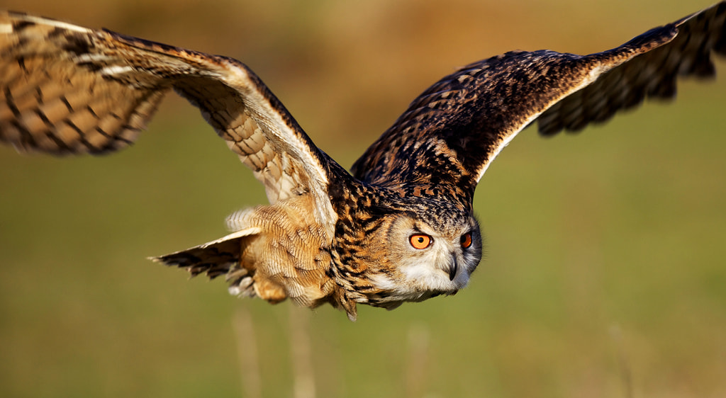Photograph on a mission by Mark Bridger on 500px