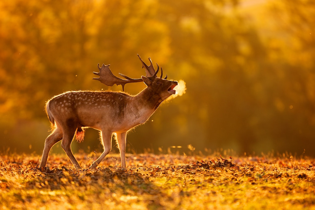 Photograph breath by Mark Bridger on 500px