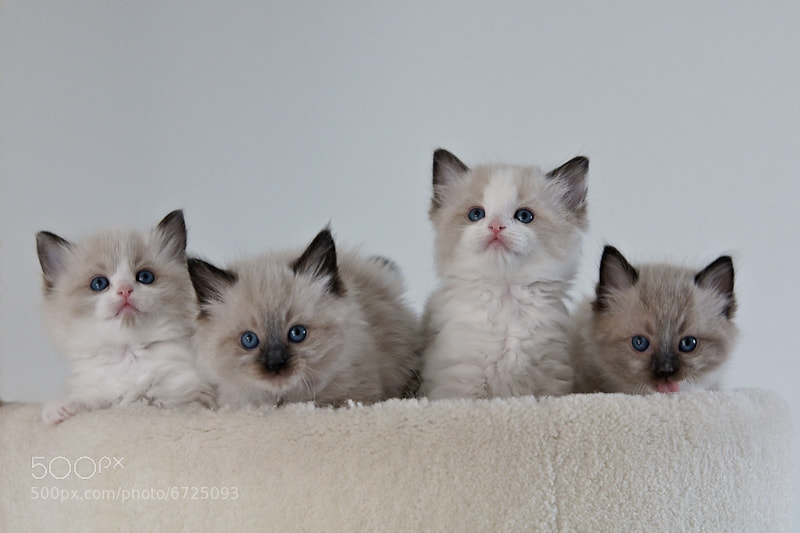 Four Little Kittens by Geertje Weustenenk
