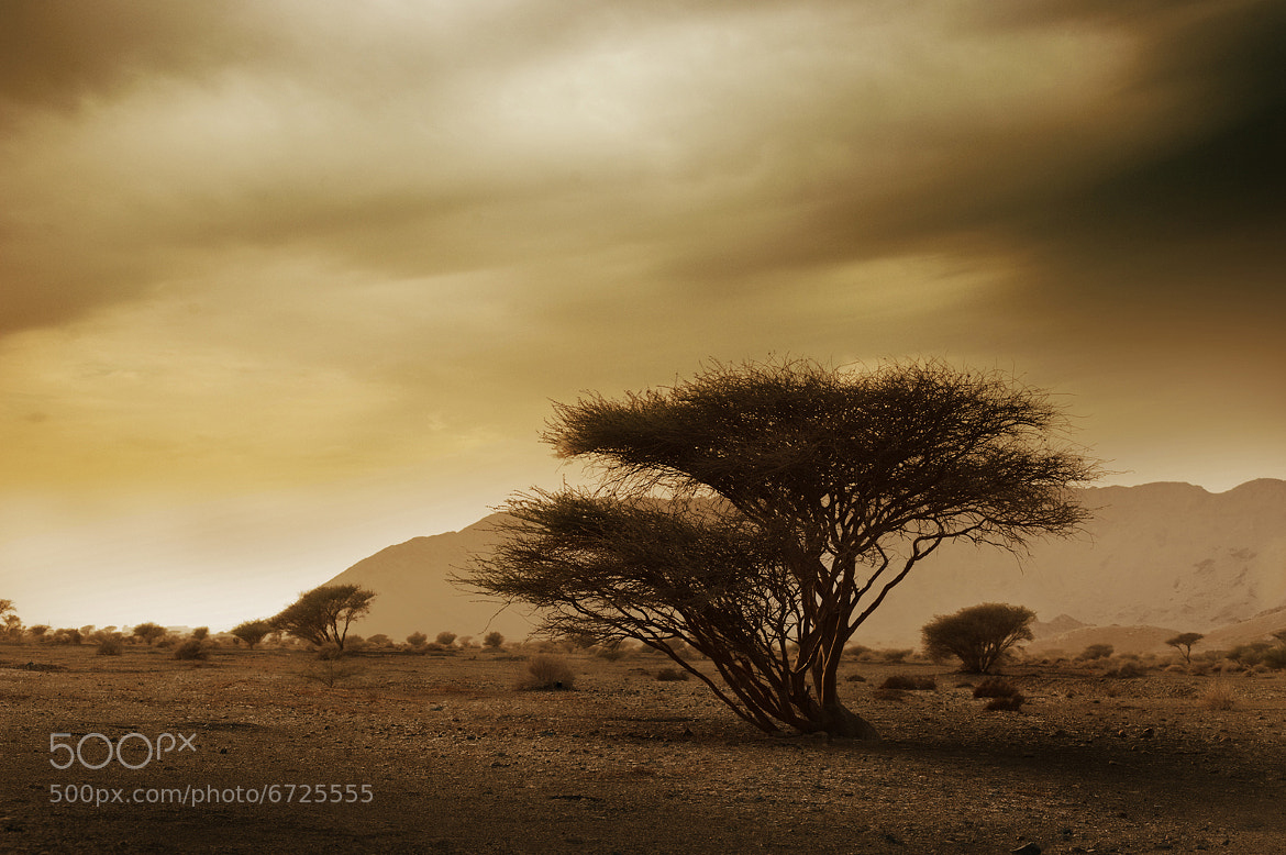 Photograph Desert Tree by Ali Azarmi on 500px