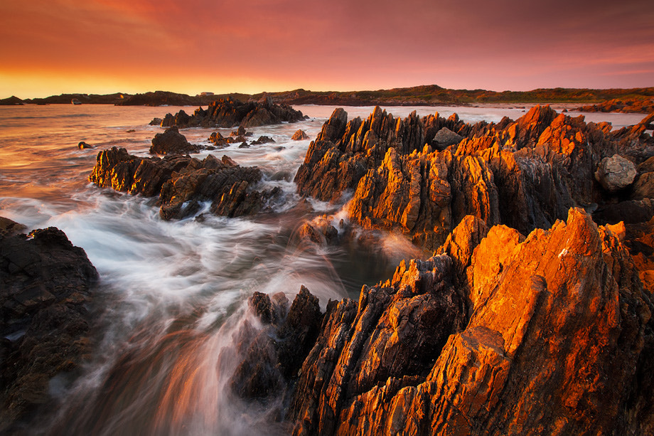 Photograph Wild Tarkine by Dylan Toh  & Marianne Lim on 500px