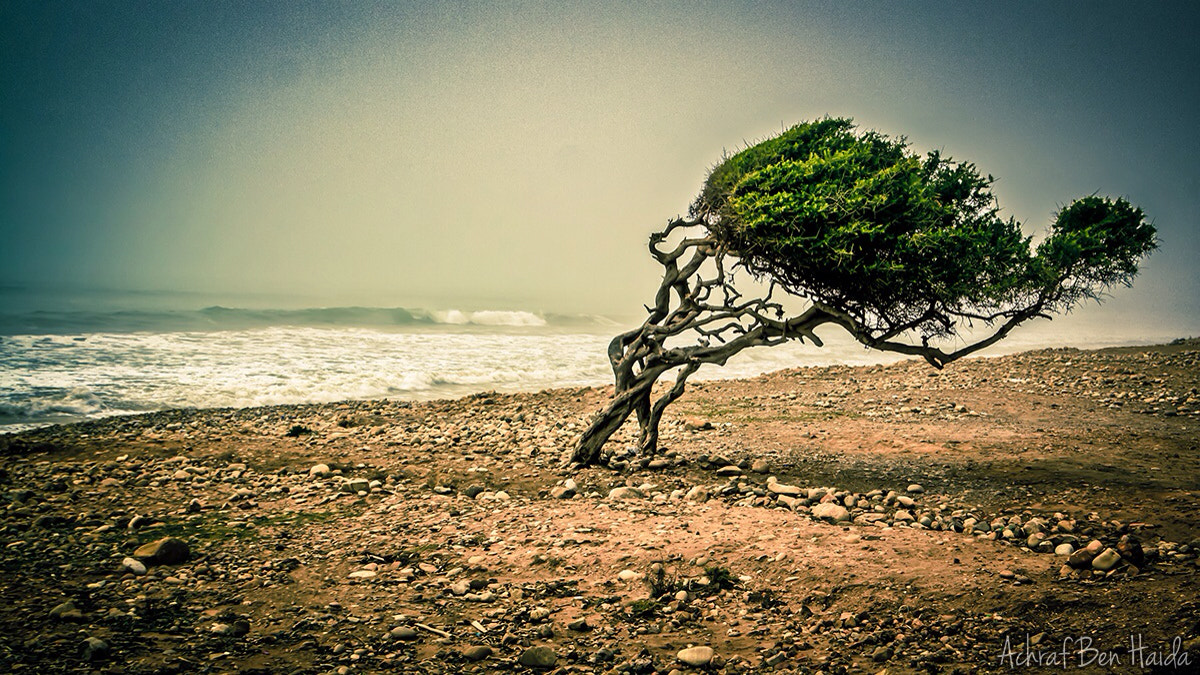Photograph grow in the wind by Achraf Ben Haida on 500px