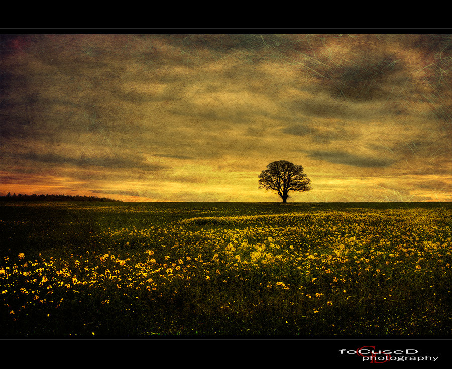 Photograph [my tree] by Carsten  Dieterich on 500px