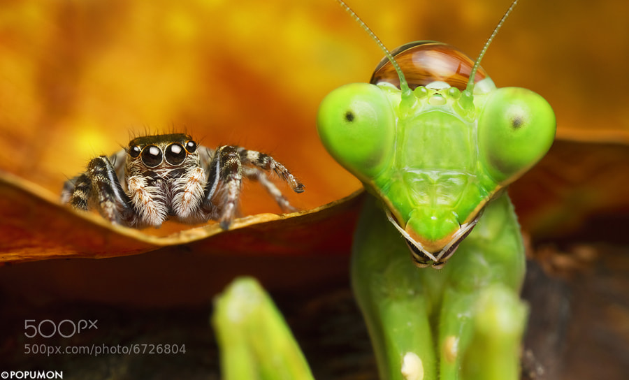 Photograph WE 'RE FRIENDS by POPUMON TiH on 500px