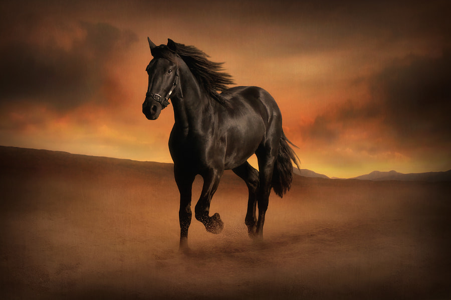 Freedom in the Desert by Jenny Woodward on 500px.com