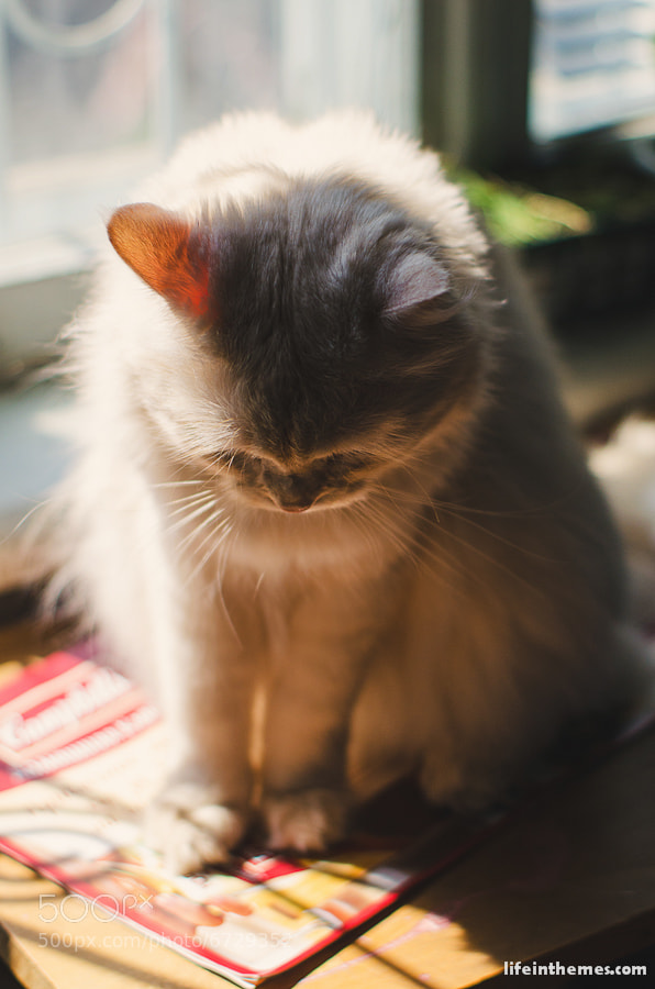 Photograph the Cat by Tali  Å on 500px