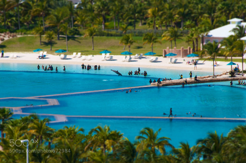 Photograph Dolphin Cay by David Kosmos Smith on 500px