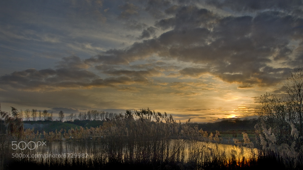 Photograph Reeds at College Lake by Robert Lewis on 500px