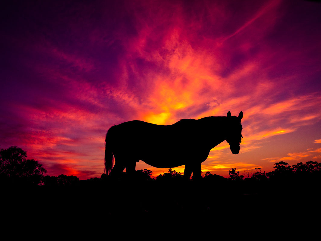 Photograph silhouette by raz has on 500px
