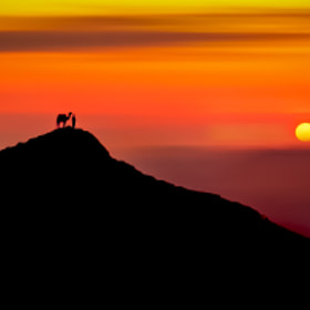 "The Nomad""s sunset. by mojaa neddo (mojaaneddo) on 500px.com"