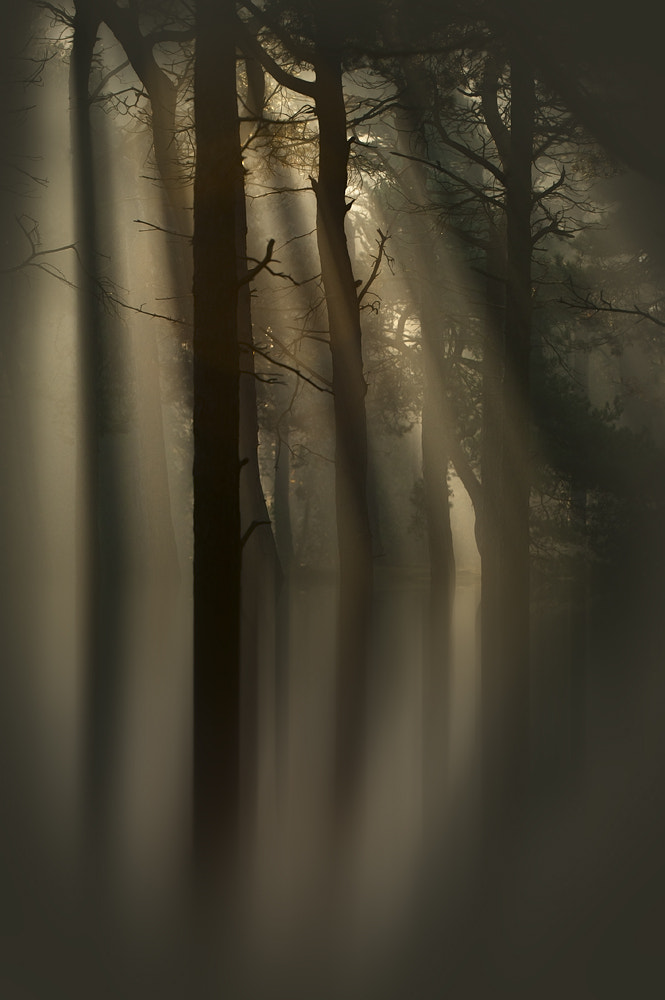 Photograph Trees and Light by Andy Astbury on 500px