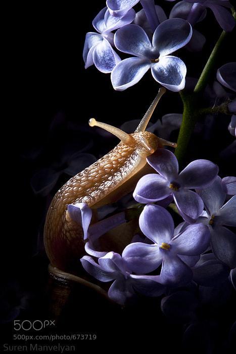 Photograph Posing by Suren Manvelyan on 500px