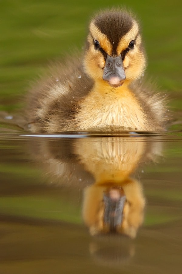 Photograph Cute Overload by Roeselien Raimond on 500px