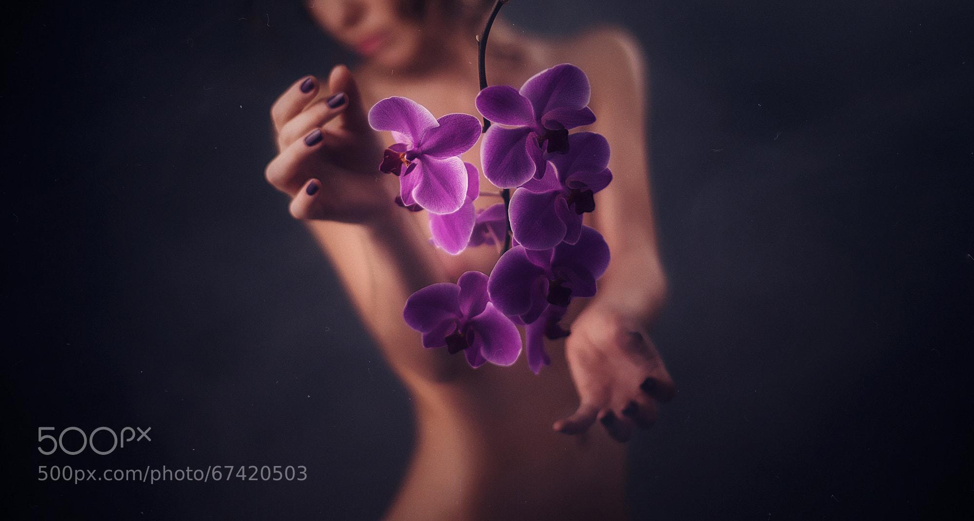 Photograph Orchid by Kirill Chernyavsky on 500px