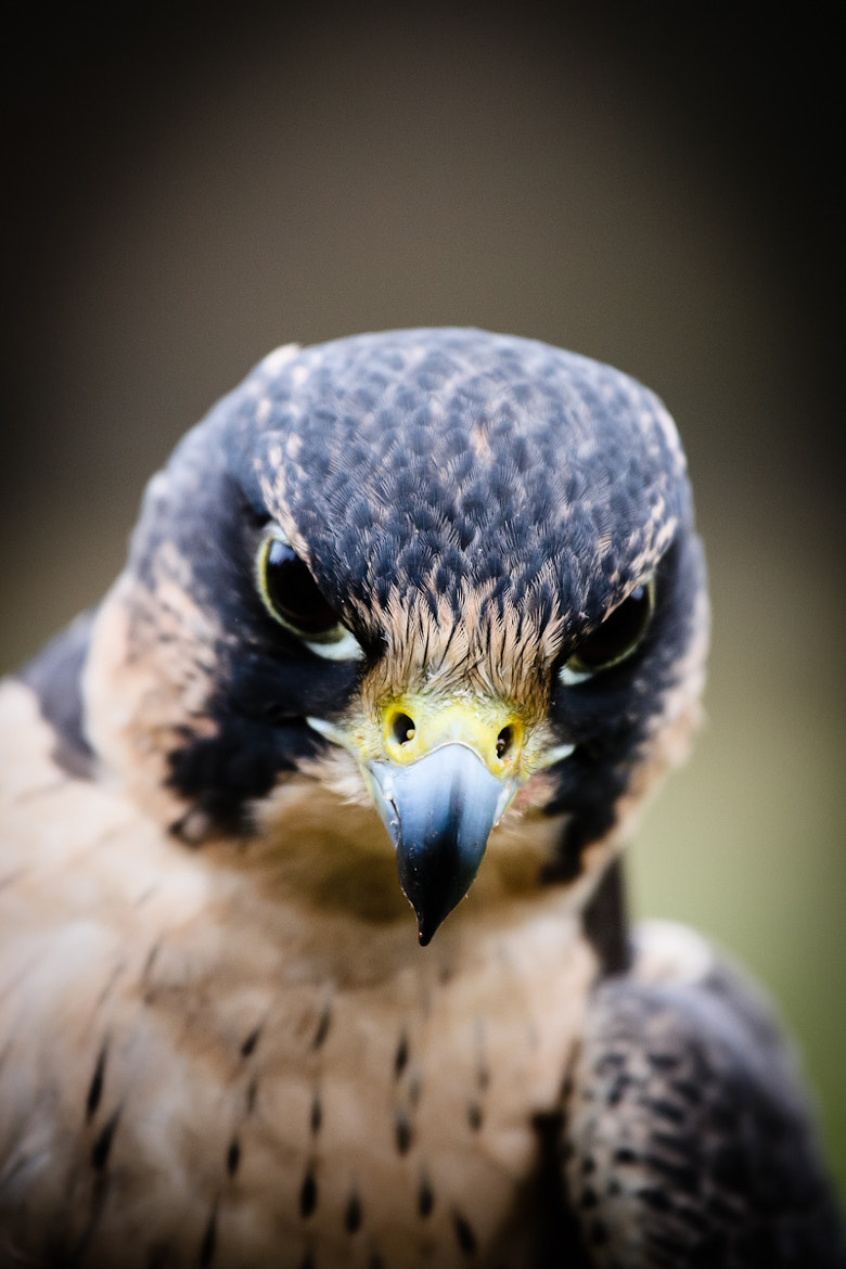 Photograph In Focus by Philipp Wedel on 500px