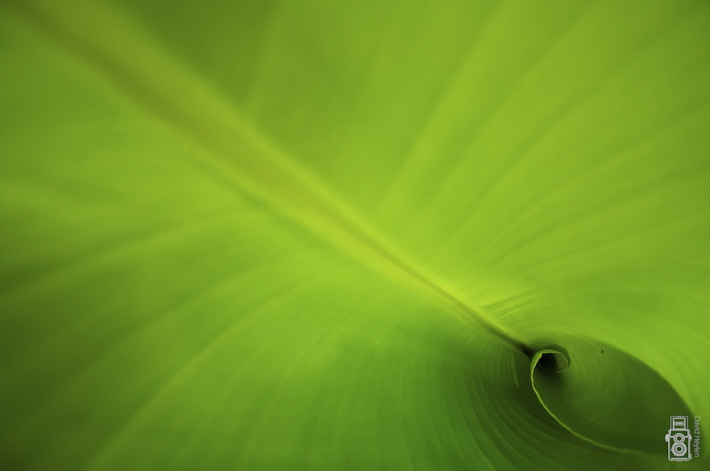Photograph Green Abbys by David Heylen on 500px