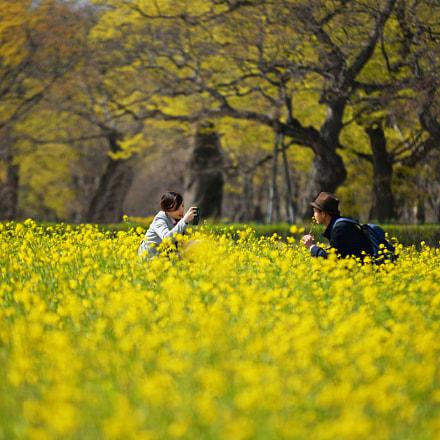 Love in the Rape flower field
