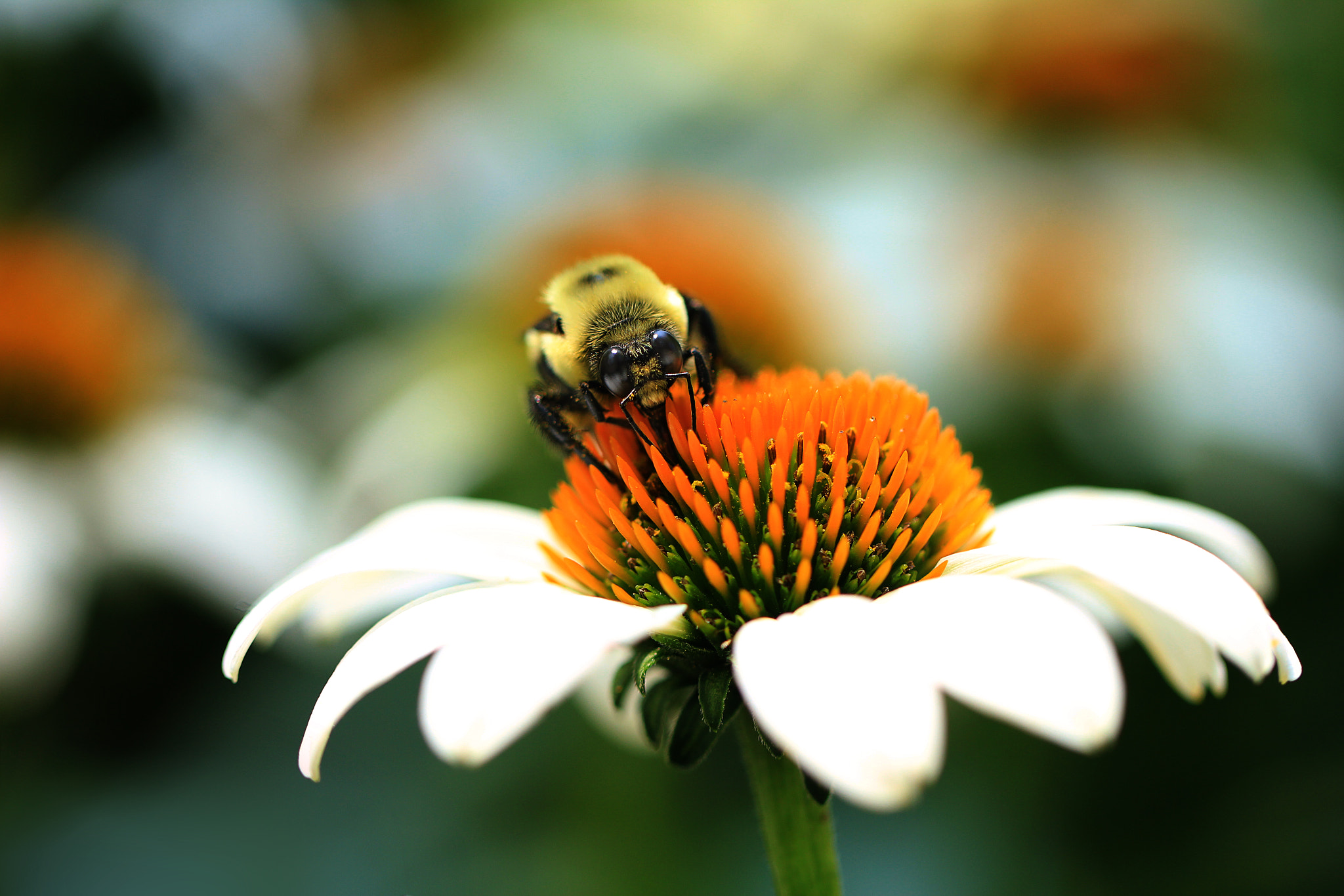 Photograph Let It Bee by Claudia López Rhea on 500px