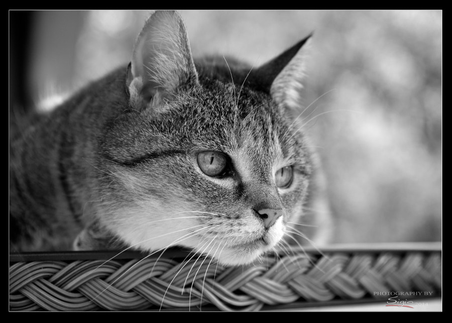 I'm bored by Andreas Piller on 500px