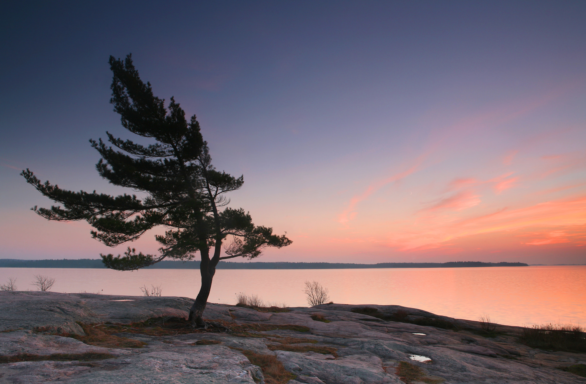 Photograph Windswept Pine, Killbear Provincial Park by Thomas McGory on 500px