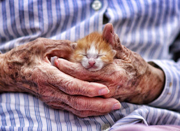 Old hands, new kitten by Klassy Goldberg on 500px