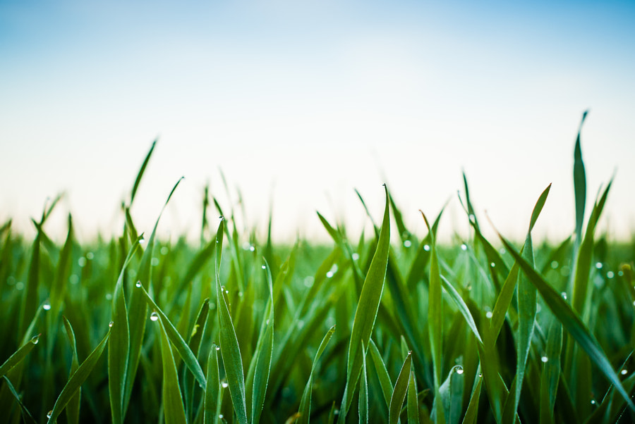 Wet grass by ?ukasz Stuku on 500px.com