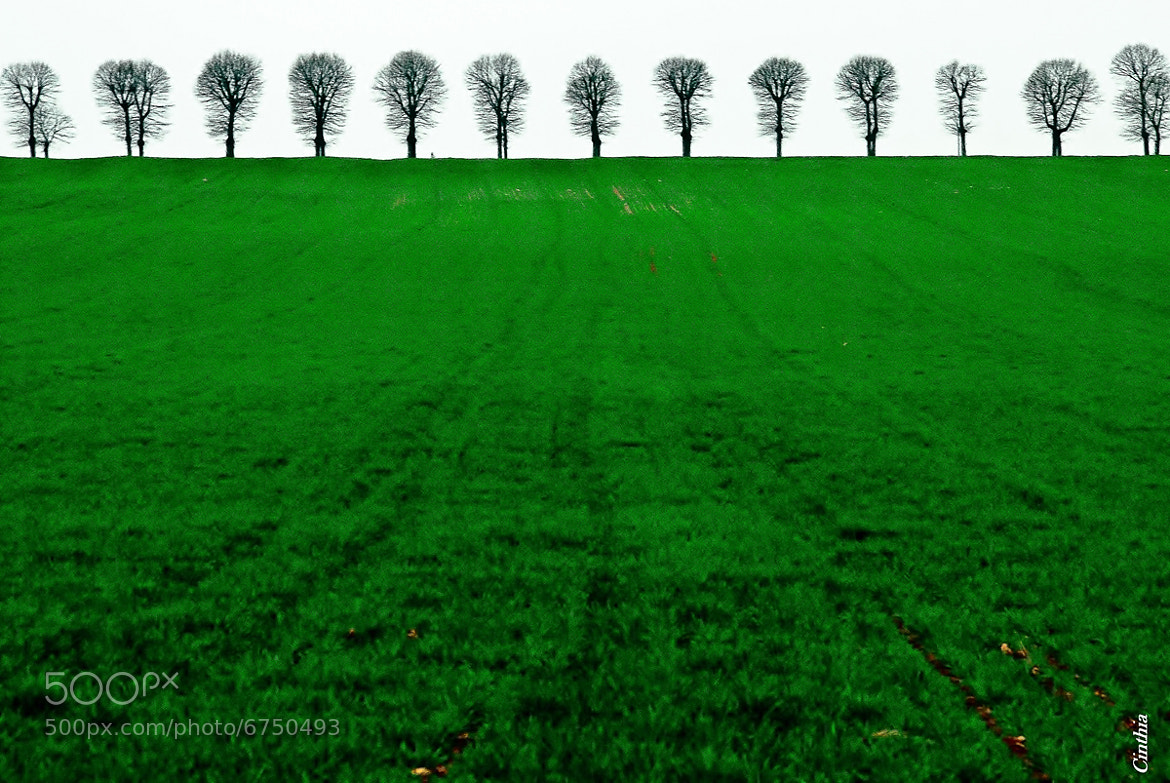 Photograph Green by Cinthia Gambuli on 500px