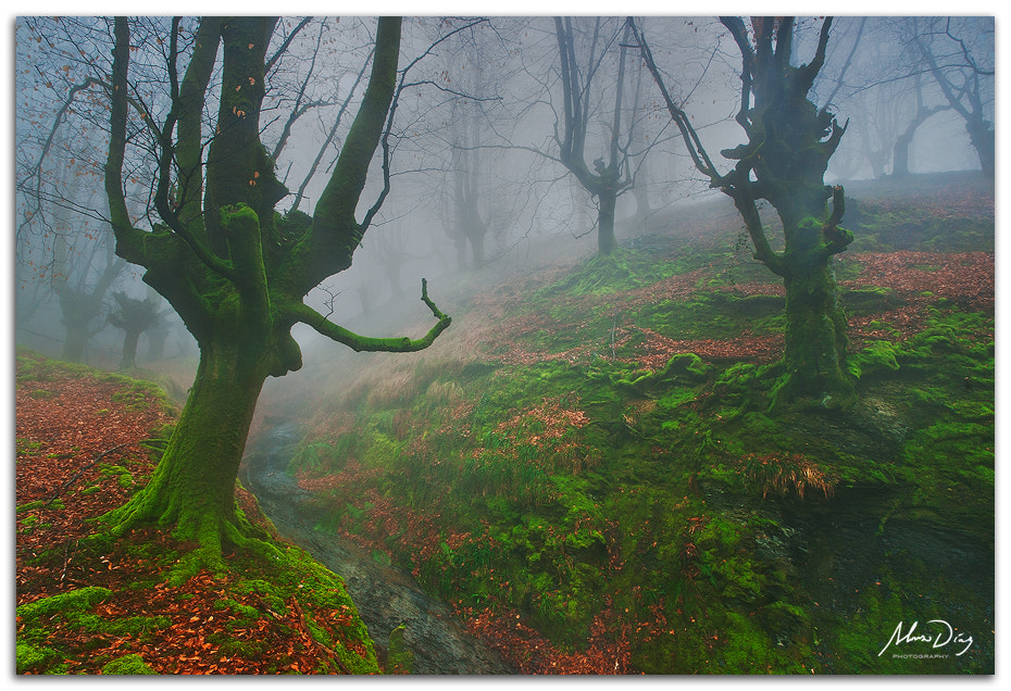 Photograph Looking for hobbits by Alonso Díaz on 500px