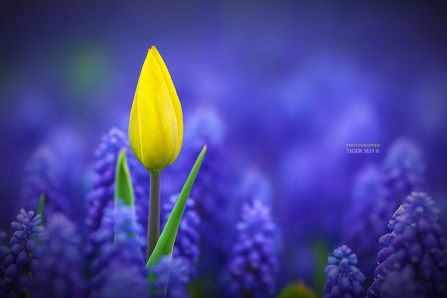 yellow? by Tiger Seo on 500px.com