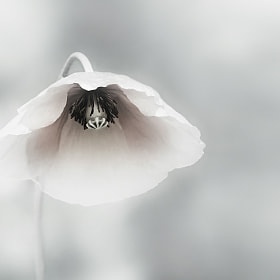 ephemeral beauty by piet flour (pietflour)) on 500px.com