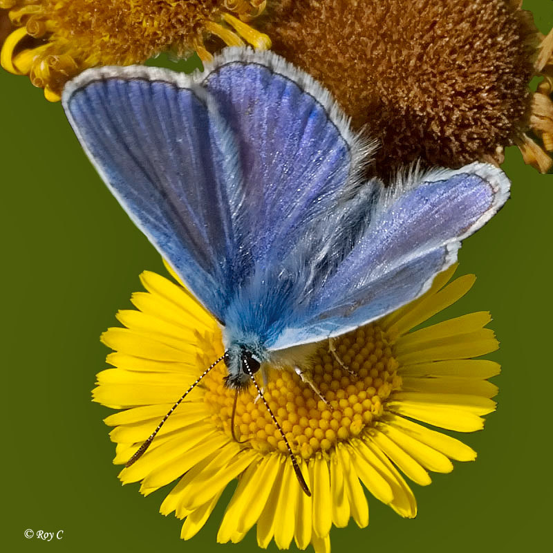 Photograph Blue on yellow by Roy Churchill on 500px
