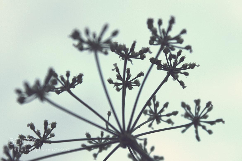 Photograph .*. by Julia Lau on 500px