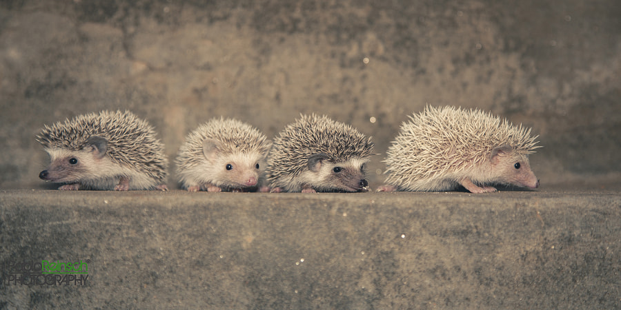 Cuatro hermanos.