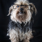 Постер, плакат: Doog with glasses