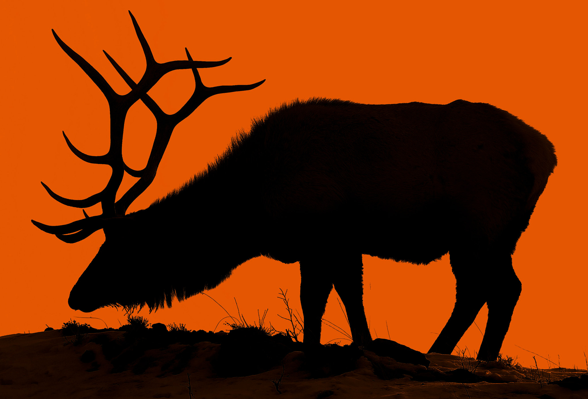 Photograph Elk at Twilight by Jeff Clow on 500px