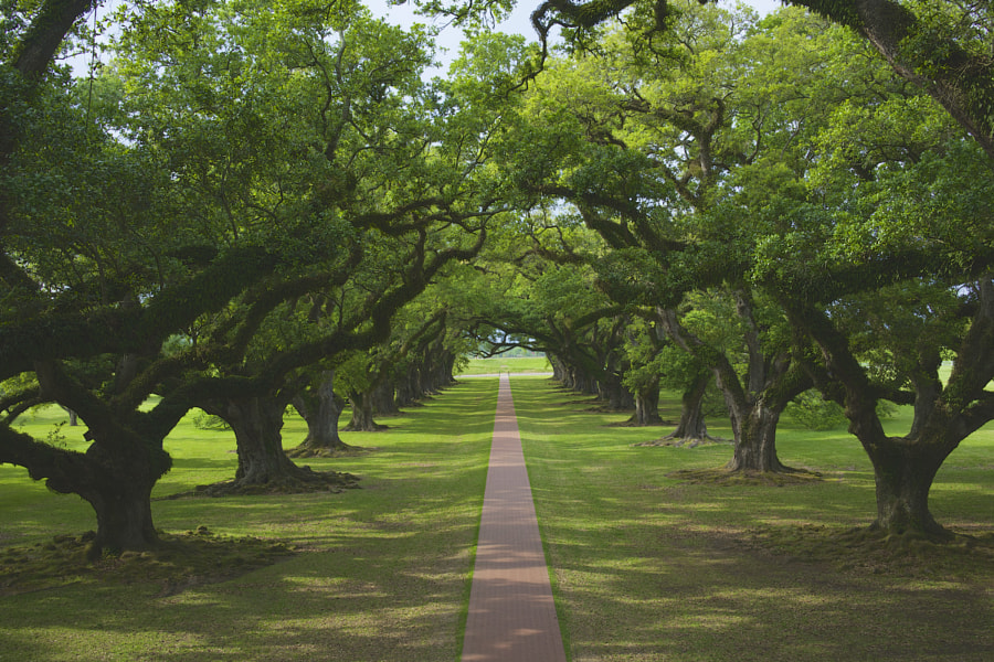 Oak Alley Plantation by David C on 500px.com