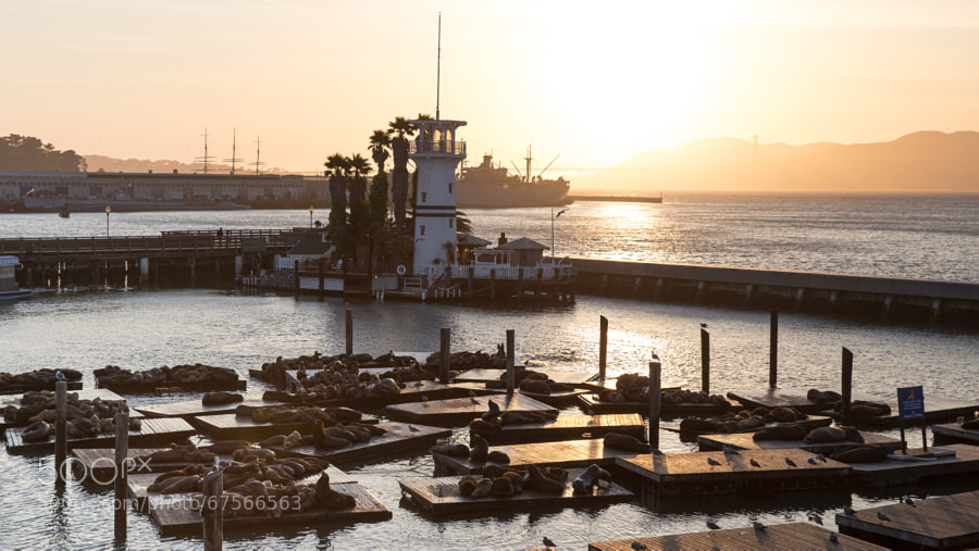 Photograph Sunset over Pier 39 by Evgeny Tchebotarev on 500px
