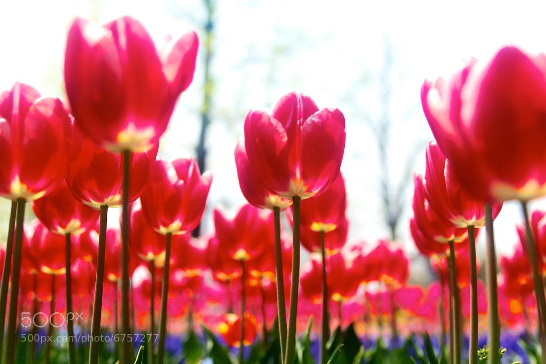 Photograph 写真 4 - 2012-04-19 by Satoru Hori on 500px