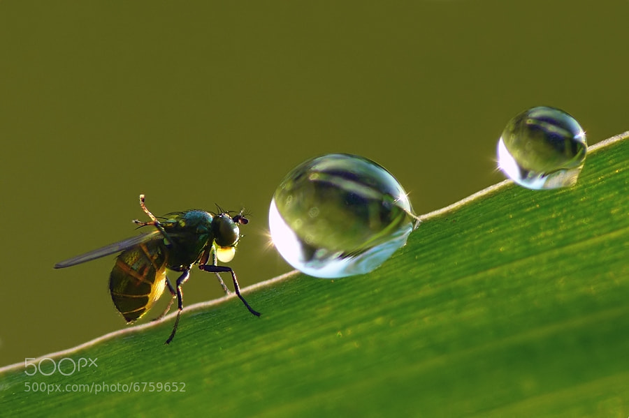 Photograph How dewdrops are made by Peter Murányi on 500px