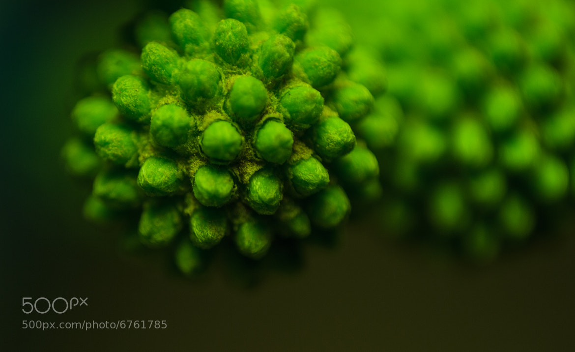 Photograph Green details # by anass mohamed on 500px
