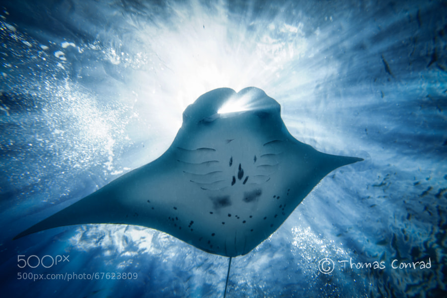 Photograph Rays Rays by Thomas Conrad  on 500px