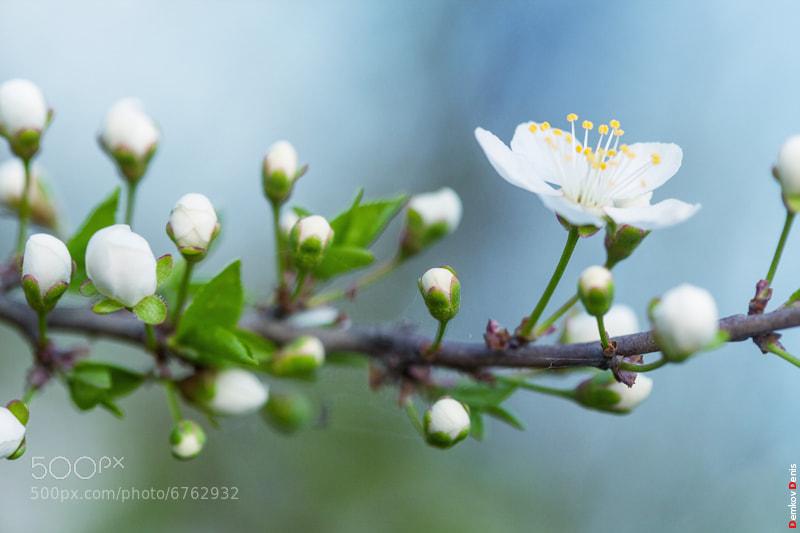 Photograph Spring by Denis Demkov on 500px
