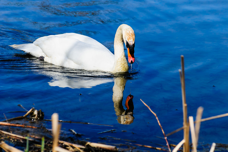 As is the Swan has stopped to ask, and she better get the right answer.